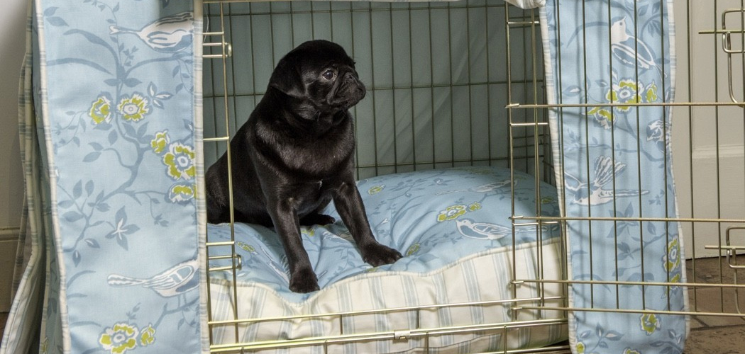 Crate Training your Pug