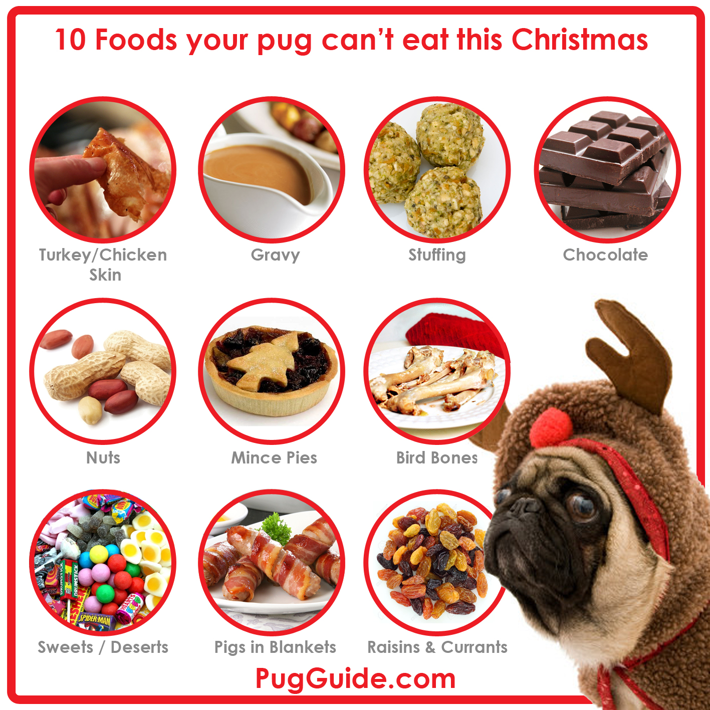 10 Foods Pugs Can't Eat at Christmas