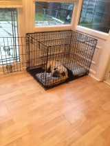 credit: Pug Relaxing in His Crate