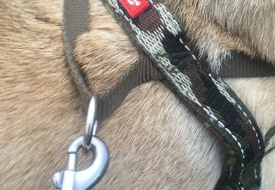EzyDog Harness Clip - Full Review
