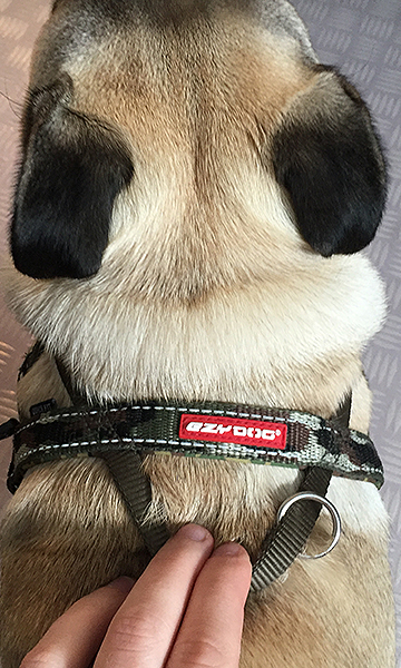 EzyDog Harness for Small Dogs