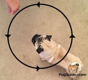 Teach Your Pug To Dance | Step 2